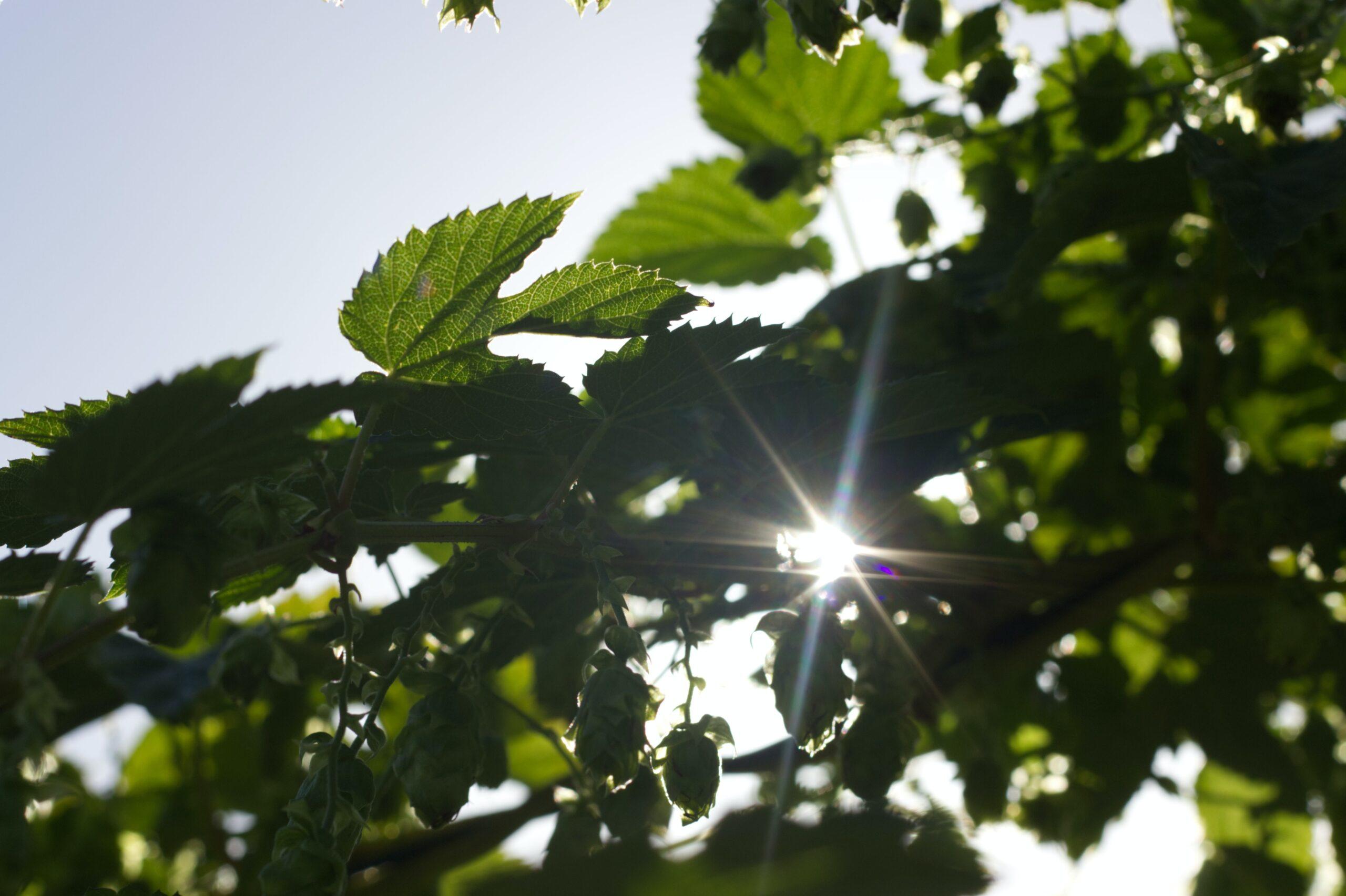 Se la ripartenza ci allontana dagli obiettivi ambientali. Italia bocciata in sostenibilità, ma c'è ancora una piccola speranza